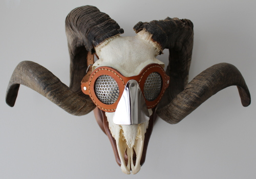 mountail sheep skull with goggles